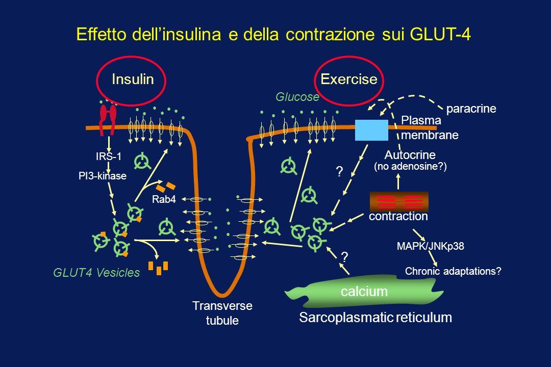 calcium .contraction MAPK/JNKp38 Chronic adaptations.