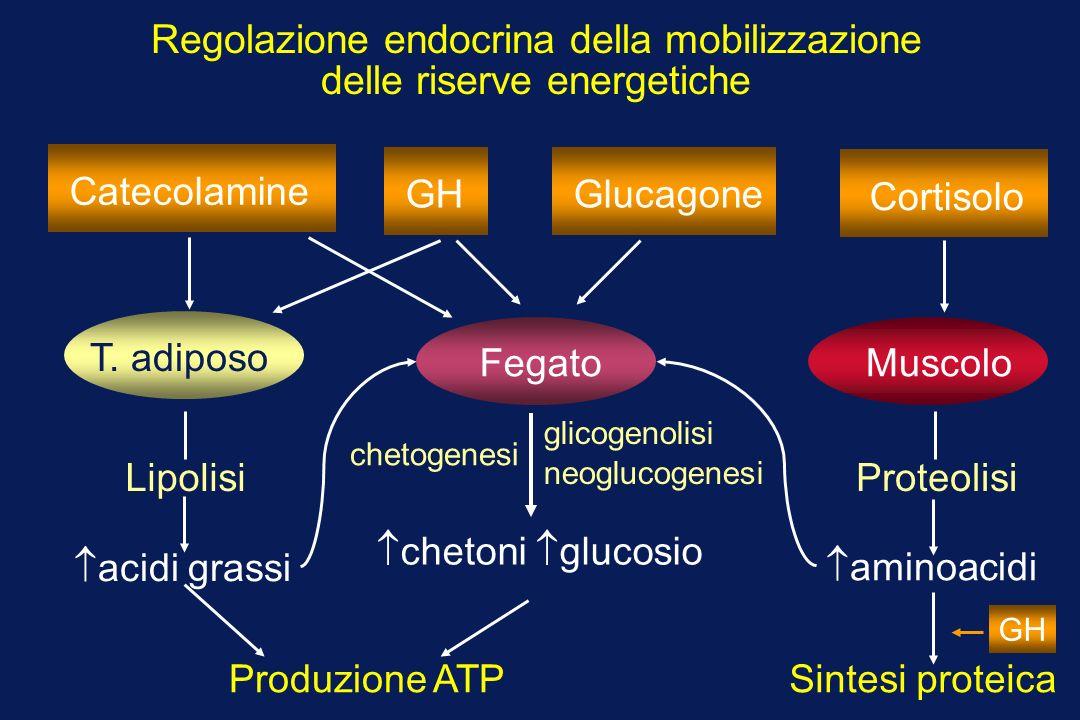 CatecolamineGHGlucagoneCortisolo Regolazione endocrina della mobilizzazione delle riserve energetiche T.
