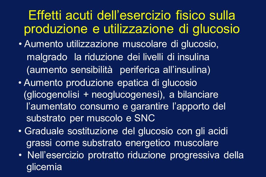 Effetti acuti dellesercizio fisico sulla produzione e utilizzazione di glucosio Aumento utilizzazione muscolare di glucosio, malgrado la riduzione dei livelli di insulina (aumento sensibilità periferica allinsulina) Nellesercizio protratto riduzione progressiva della glicemia Graduale sostituzione del glucosio con gli acidi grassi come substrato energetico muscolare Aumento produzione epatica di glucosio (glicogenolisi + neoglucogenesi), a bilanciare laumentato consumo e garantire lapporto del substrato per muscolo e SNC