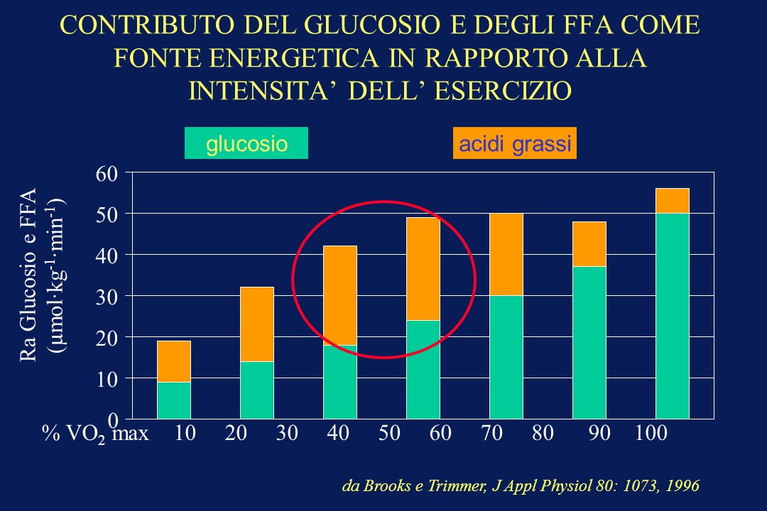 CONTRIBUTO DEL GLUCOSIO E DEGLI FFA COME FONTE ENERGETICA IN RAPPORTO ALLA INTENSITA DELL ESERCIZIO % VO 2 max 10 20 30 40 50 60 70 80 90 100 Ra Glucosio e FFA (µmol·kg -1 ·min -1 ) GLUCOSEFFA da Brooks e Trimmer, J Appl Physiol 80: 1073, 1996 0 10 20 30 40 50 60 glucosioacidi grassi