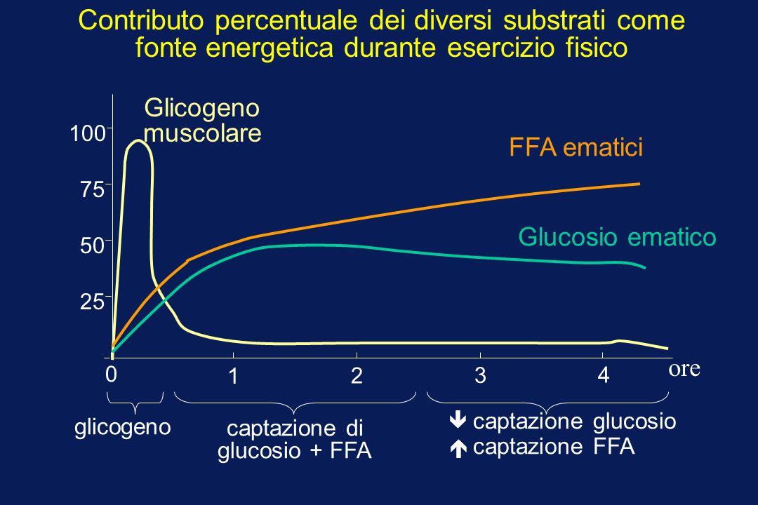0 1 2 3 4 25 50 75 100 Glicogeno muscolare glicogeno FFA ematici captazione di glucosio + FFA Glucosio ematico captazione glucosio captazione FFA Contributo percentuale dei diversi substrati come fonte energetica durante esercizio fisico ore