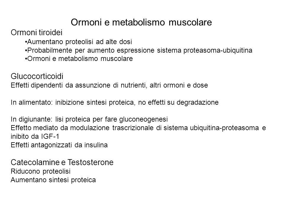 Ormoni e metabolismo muscolare Ormoni tiroidei Aumentano proteolisi ad alte dosi Probabilmente per aumento espressione sistema proteasoma-ubiquitina O
