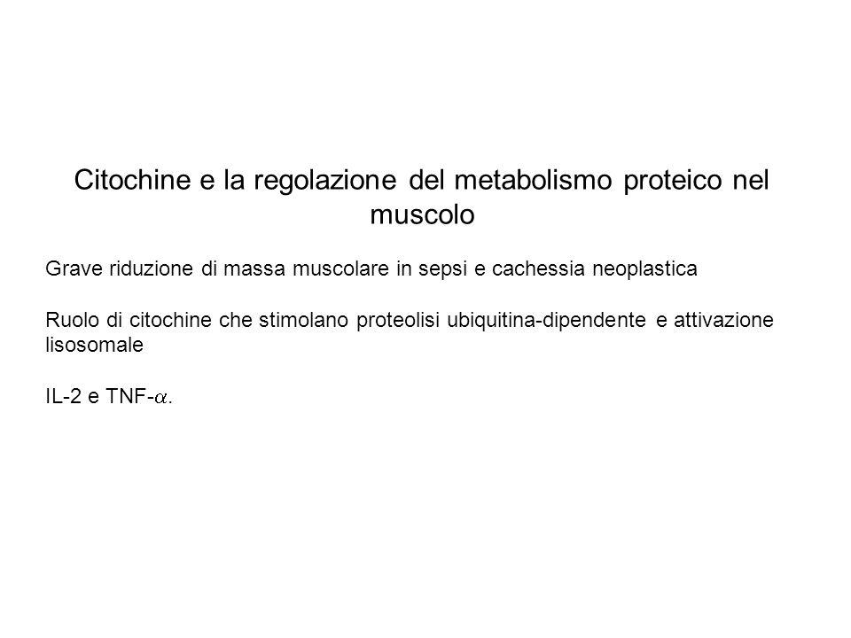 Citochine e la regolazione del metabolismo proteico nel muscolo Grave riduzione di massa muscolare in sepsi e cachessia neoplastica Ruolo di citochine
