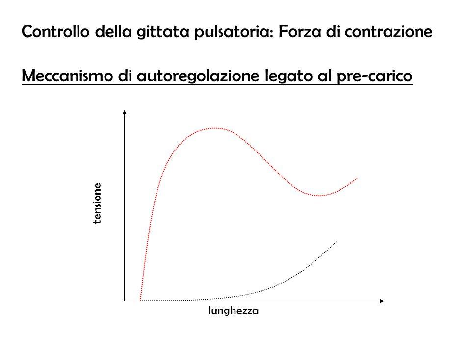 lunghezza tensione Controllo della gittata pulsatoria: Forza di contrazione Meccanismo di autoregolazione legato al pre-carico