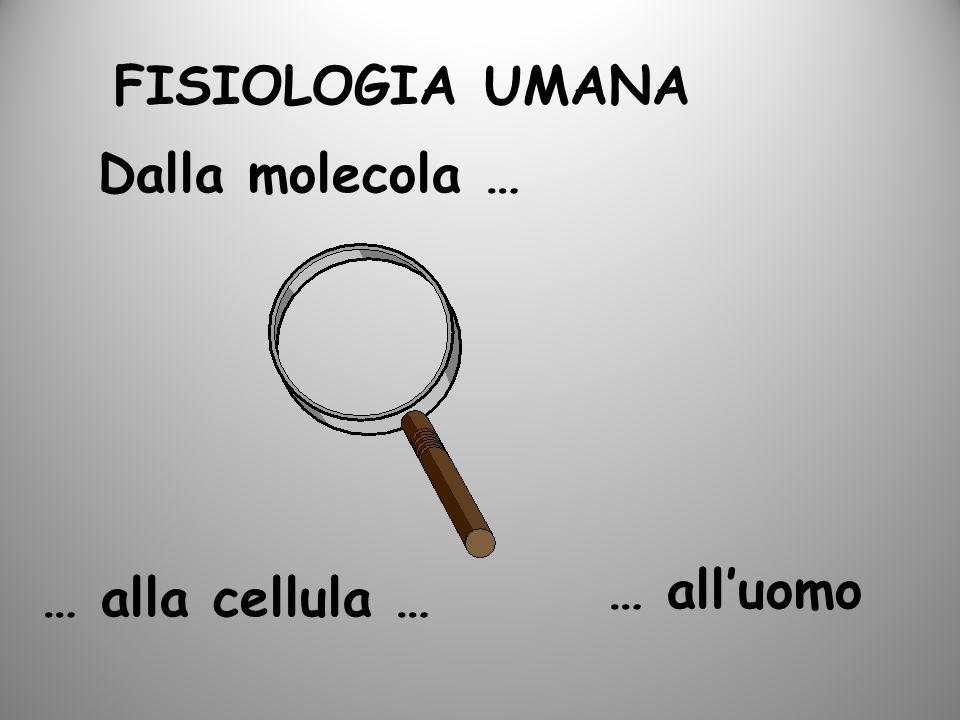 FISIOLOGIA UMANA Dalla molecola … … alluomo … alla cellula …