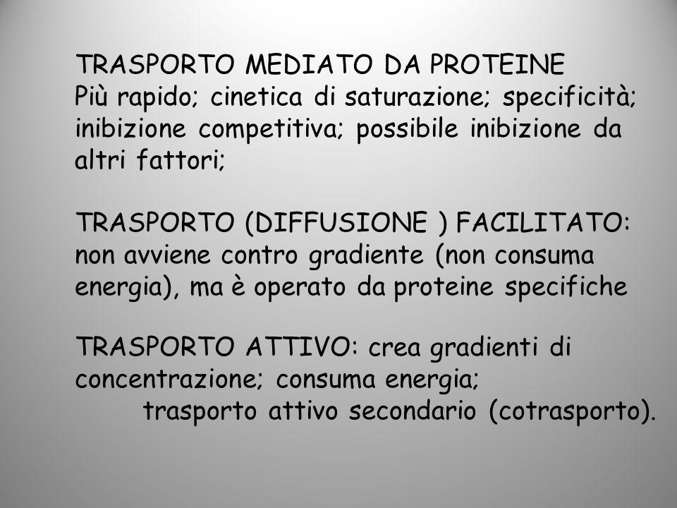 TRASPORTO MEDIATO DA PROTEINE Più rapido; cinetica di saturazione; specificità; inibizione competitiva; possibile inibizione da altri fattori; TRASPOR