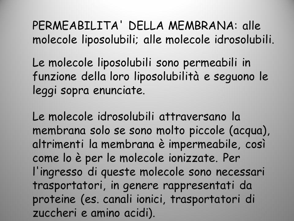 Le molecole idrosolubili attraversano la membrana solo se sono molto piccole (acqua), altrimenti la membrana è impermeabile, così come lo è per le mol