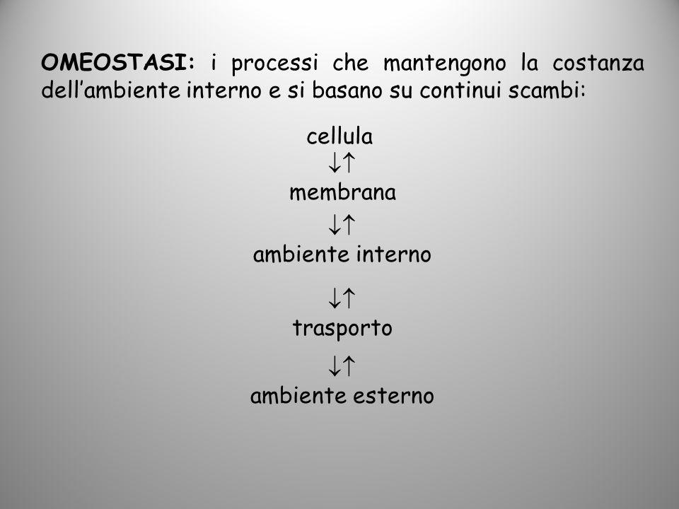 OMEOSTASI: i processi che mantengono la costanza dellambiente interno e si basano su continui scambi: cellula membrana ambiente interno trasporto ambi