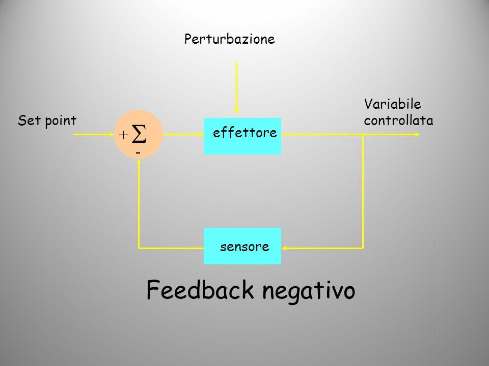 Set point sensore Variabile controllata effettore + + Perturbazione Feedback positivo