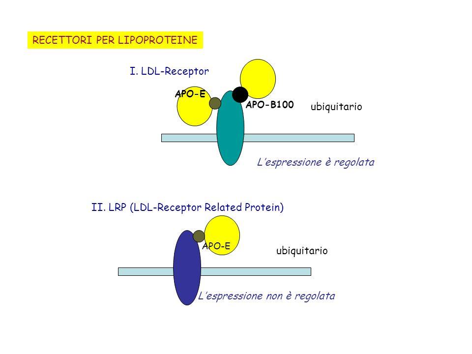 RECETTORI PER LIPOPROTEINE ubiquitario I. LDL-Receptor APO-B100 Lespressione è regolata APO-E II. LRP (LDL-Receptor Related Protein) APO-E ubiquitario