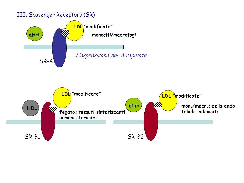 III. Scavenger Receptors (SR) SR-A monociti/macrofagi LDL modificate SR-B1 fegato; tessuti sintetizzanti ormoni steroidei LDL modificate HDL mon./macr