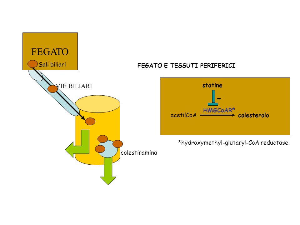 FEGATO VIE BILIARI Sali biliari colestiramina acetilCoAcolesterolo HMGCoAR* *hydroxymethyl-glutaryl-CoA reductase - statine FEGATO E TESSUTI PERIFERIC