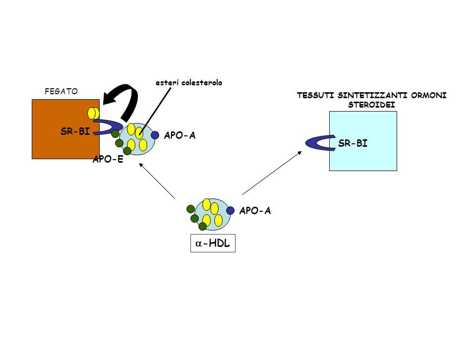 APO-A -HDL FEGATO APO-A APO-E esteri colesterolo SR-BI TESSUTI SINTETIZZANTI ORMONI STEROIDEI SR-BI