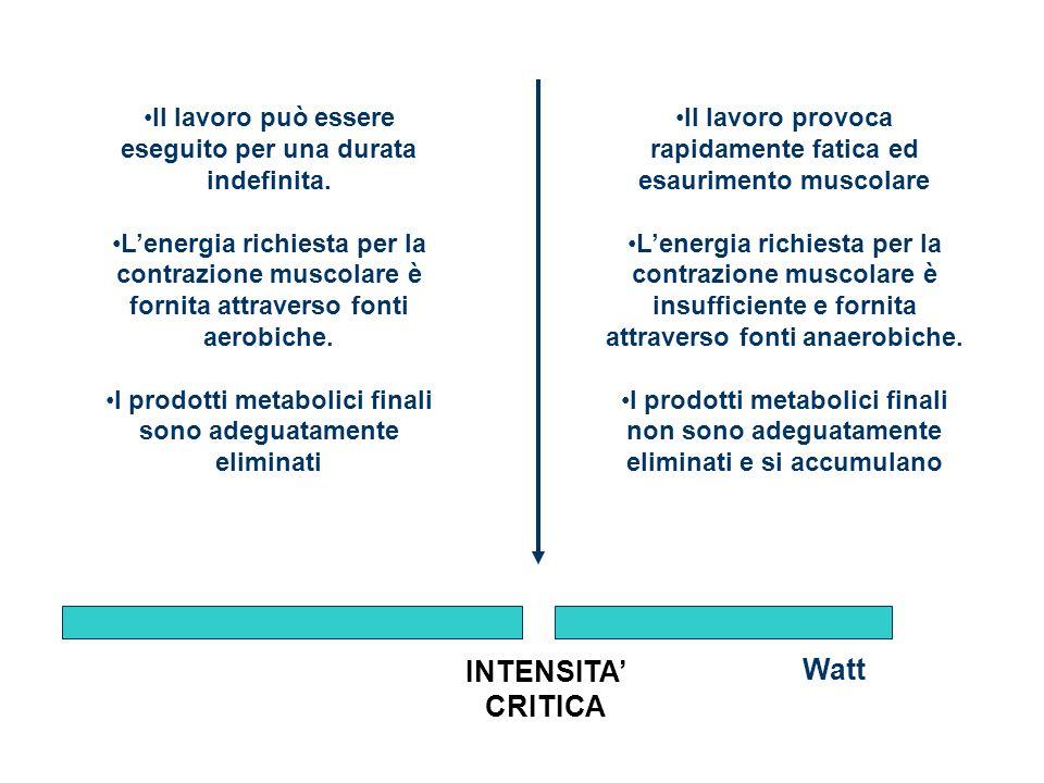Watt Il lavoro può essere eseguito per una durata indefinita. Lenergia richiesta per la contrazione muscolare è fornita attraverso fonti aerobiche. I