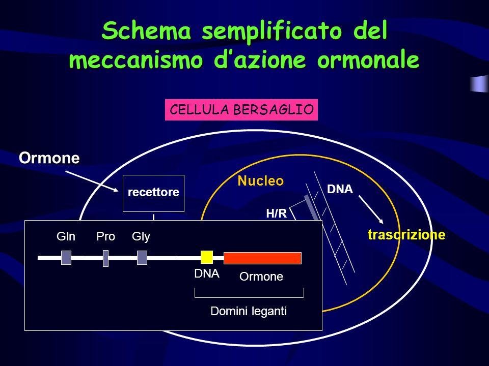 Schema semplificato del meccanismo dazione ormonale Ormone Complesso ormone recettore recettore H/R DNA trascrizione Nucleo CELLULA BERSAGLIO GlnProGl
