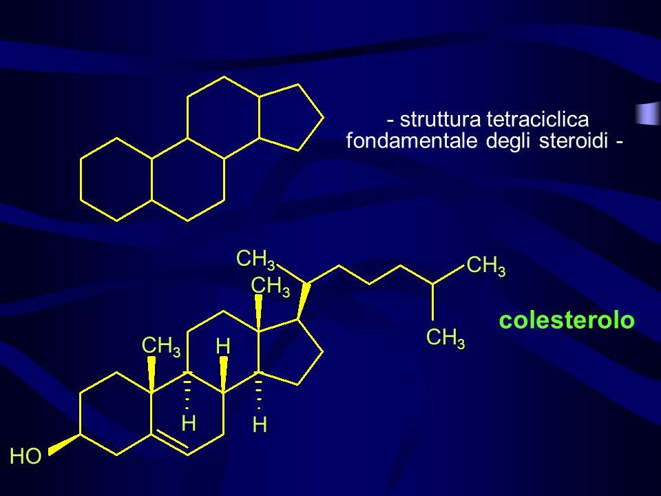 HO CH 3 H H H colesterolo - struttura tetraciclica fondamentale degli steroidi -