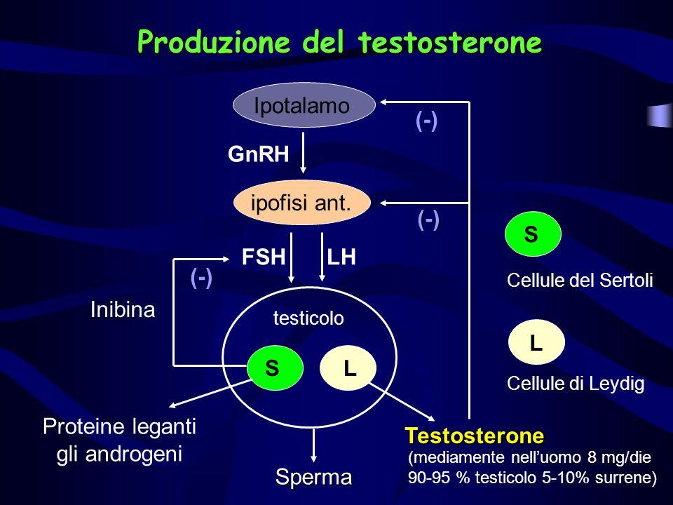 Produzione del testosterone testicolo LS Cellule del Sertoli Cellule di Leydig Sperma Ipotalamoipofisi ant. FSHLH Proteine leganti gli androgeni (-) I