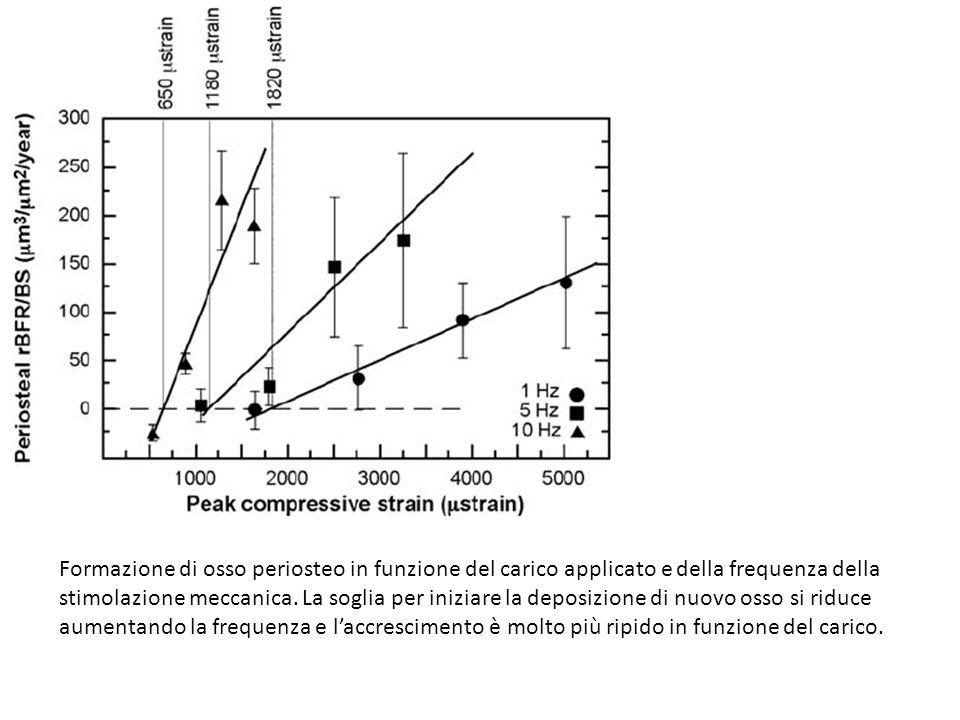 Formazione di osso periosteo in funzione del carico applicato e della frequenza della stimolazione meccanica. La soglia per iniziare la deposizione di