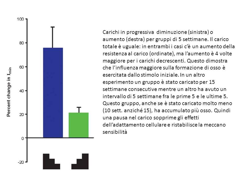 Carichi in progressiva diminuzione (sinistra) o aumento (destra) per gruppi di 5 settimane. Il carico totale è uguale: in entrambi i casi cè un aument