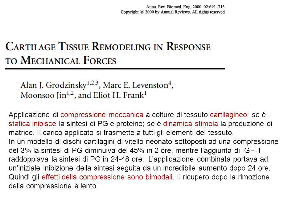 Applicazione di compressione meccanica a colture di tessuto cartilagineo: se è statica inibisce la sintesi di PG e proteine; se è dinamica stimola la