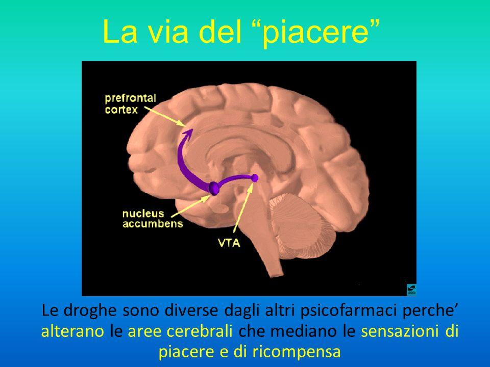 La via del piacere Le droghe sono diverse dagli altri psicofarmaci perche alterano le aree cerebrali che mediano le sensazioni di piacere e di ricompensa