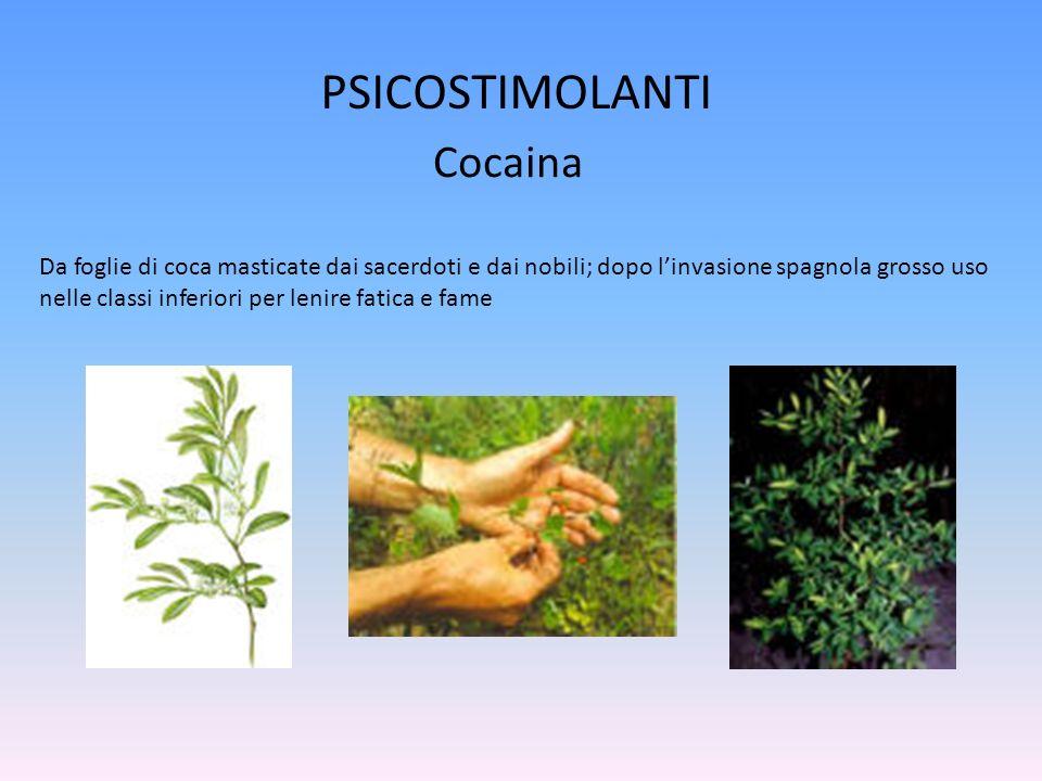 Da foglie di coca masticate dai sacerdoti e dai nobili; dopo linvasione spagnola grosso uso nelle classi inferiori per lenire fatica e fame PSICOSTIMOLANTI Cocaina