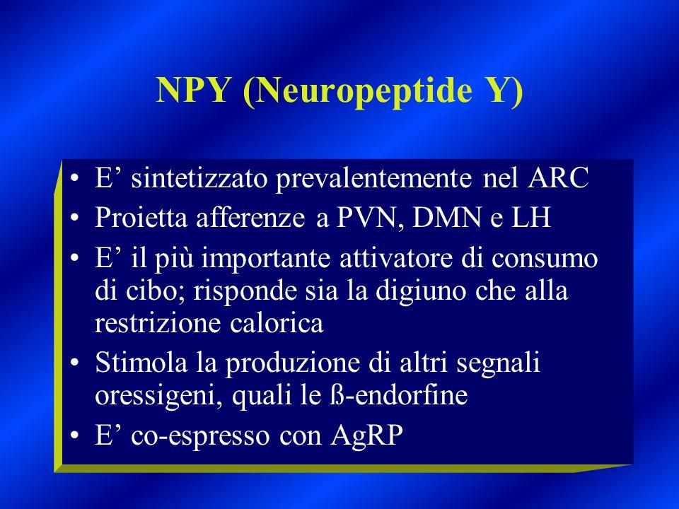 NPY (Neuropeptide Y) E sintetizzato prevalentemente nel ARC Proietta afferenze a PVN, DMN e LH E il più importante attivatore di consumo di cibo; risp