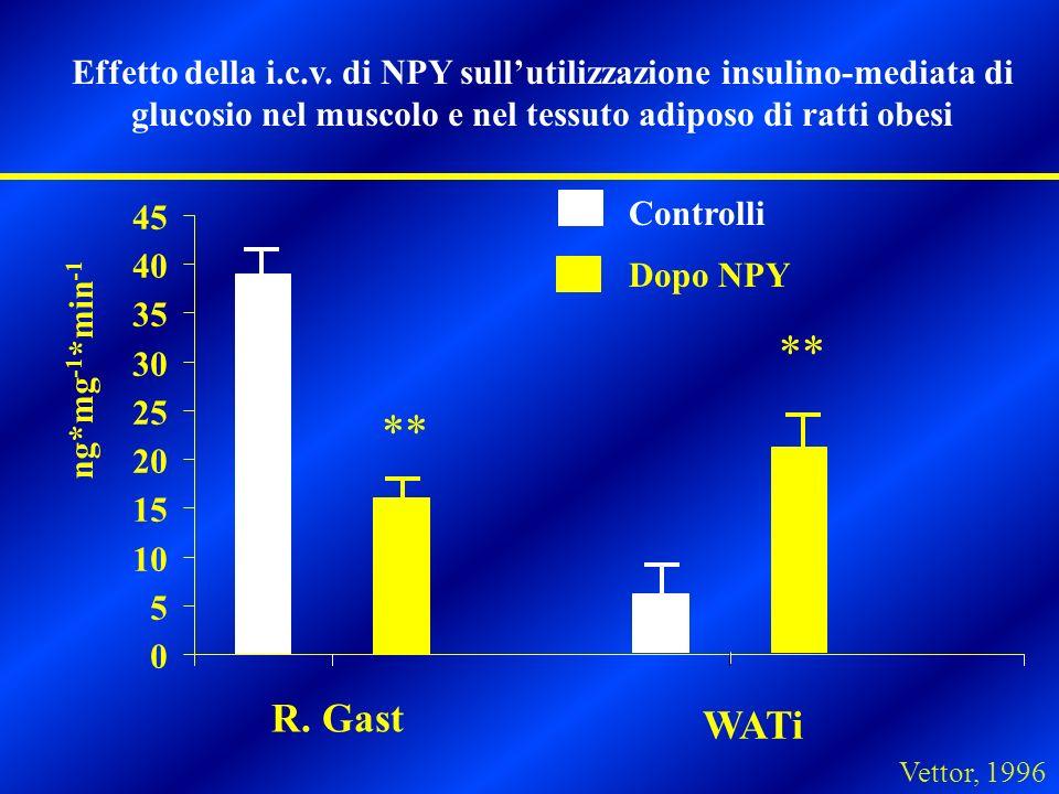 0 5 10 15 20 25 30 35 40 45 R. Gast WATi ng*mg -1 *min -1 Controlli Dopo NPY Effetto della i.c.v. di NPY sullutilizzazione insulino-mediata di glucosi