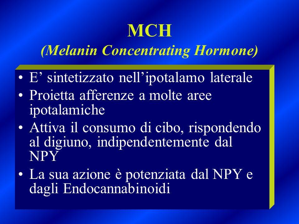 MCH (Melanin Concentrating Hormone) E sintetizzato nellipotalamo laterale Proietta afferenze a molte aree ipotalamiche Attiva il consumo di cibo, risp