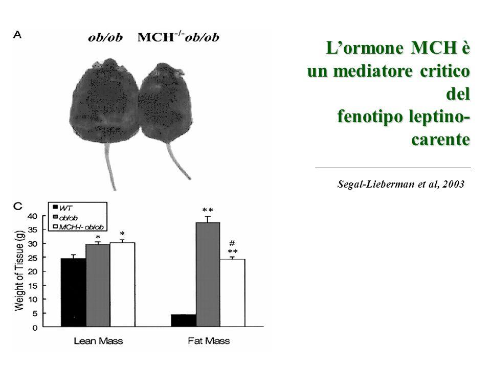 Segal-Lieberman et al, 2003 Lormone MCH è un mediatore critico del fenotipo leptino- carente