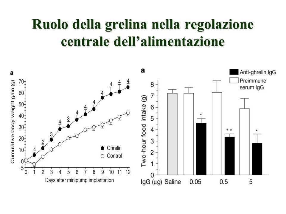 Ruolo della grelina nella regolazione centrale dellalimentazione MASAMITSU NAKAZATO et al, Nature 409, 194 - 198 (2001);