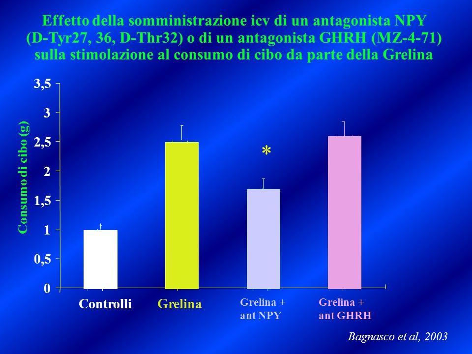 Effetto della somministrazione icv di un antagonista NPY (D-Tyr27, 36, D-Thr32) o di un antagonista GHRH (MZ-4-71) sulla stimolazione al consumo di ci