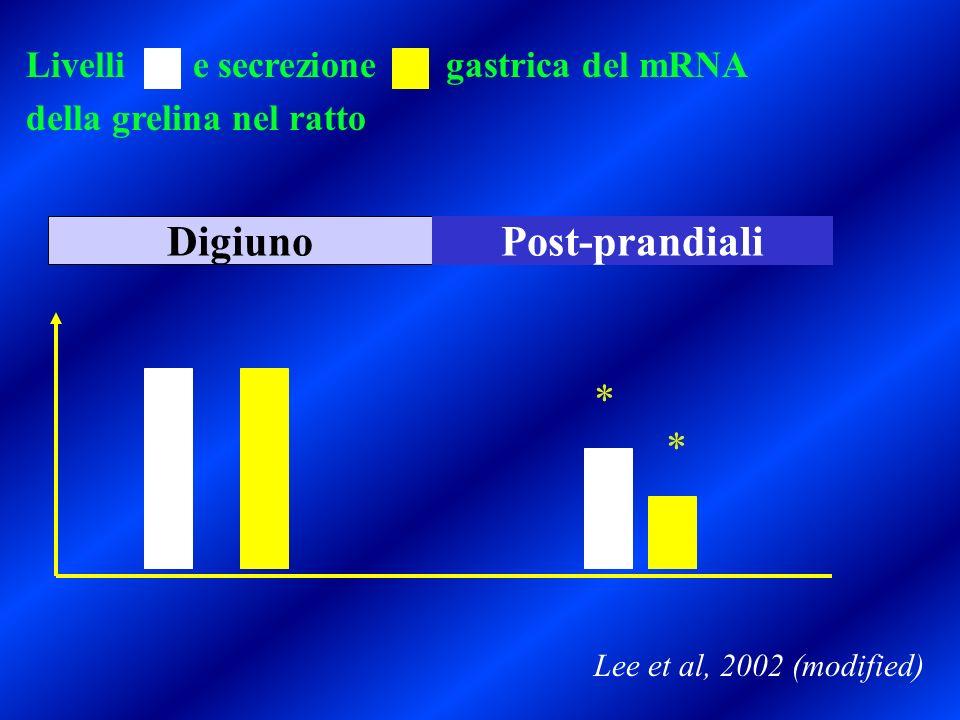 Livelli e secrezione gastrica del mRNA della grelina nel ratto DigiunoPost-prandiali Lee et al, 2002 (modified) * *