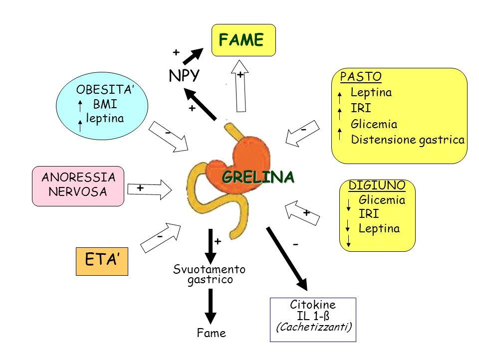 NPY Svuotamento gastrico Citokine IL 1-ß (Cachetizzanti) Fame + + + + - - - - GRELINA DIGIUNO Glicemia IRI Leptina PASTO Leptina IRI Glicemia Distensi