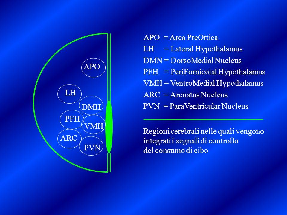 APO LH DMH PFH ARC VMH PVN APO = Area PreOttica LH = Lateral Hypothalamus DMN = DorsoMedial Nucleus PFH = PeriFornicolal Hypothalamus VMH = VentroMedi