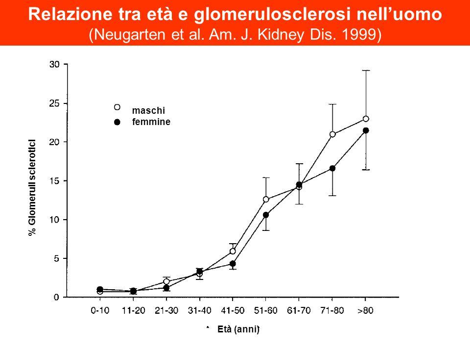 Età (anni) % Glomeruli sclerotici maschi femmine Relazione tra età e glomerulosclerosi nelluomo (Neugarten et al. Am. J. Kidney Dis. 1999)