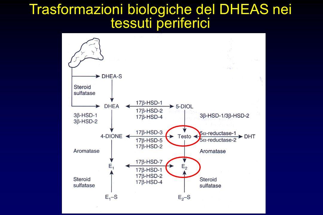 DHEA(S) Deidroepiandrosterone (solfato) precursore androgeno prodotto principalmente dal surrene in età adulta concentrazioni circolanti 100-500 volte