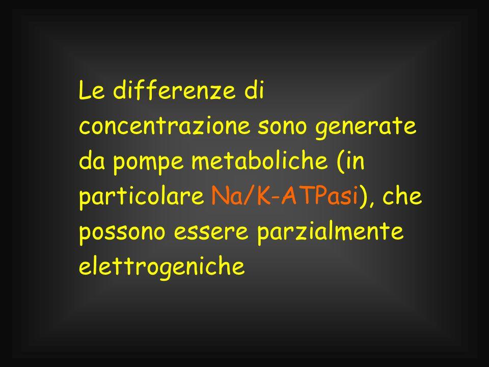 Le differenze di concentrazione sono generate da pompe metaboliche (in particolare Na/K-ATPasi), che possono essere parzialmente elettrogeniche