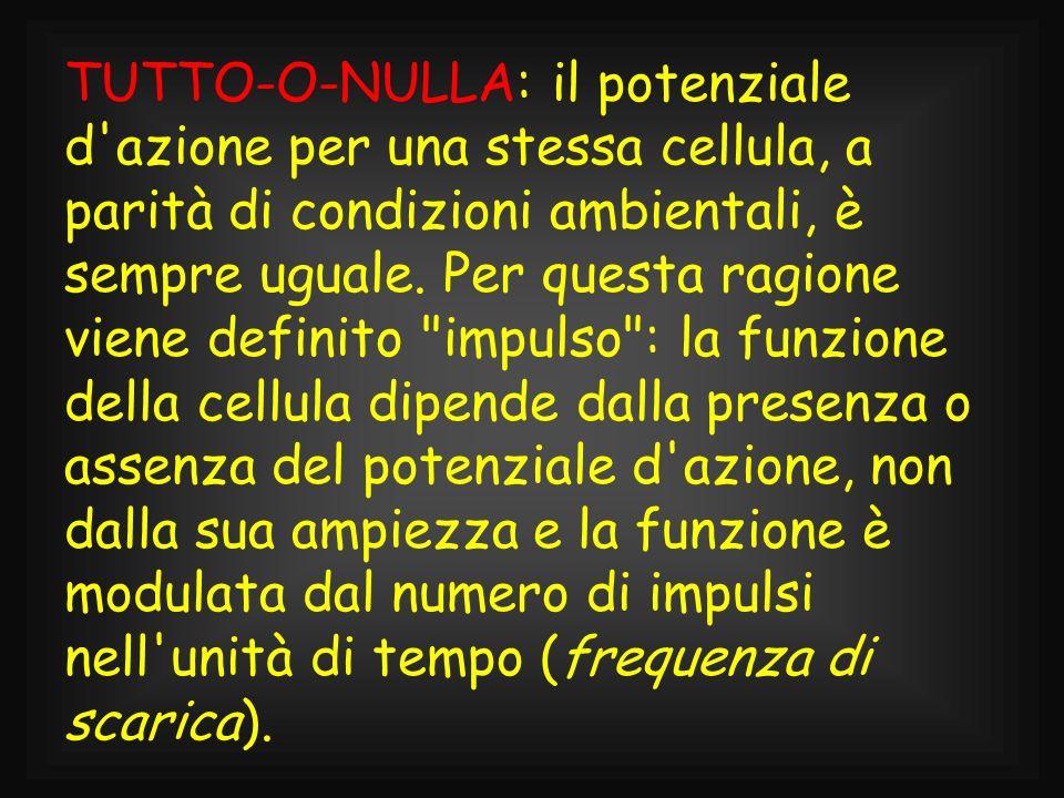TUTTO-O-NULLA: il potenziale d'azione per una stessa cellula, a parità di condizioni ambientali, è sempre uguale. Per questa ragione viene definito