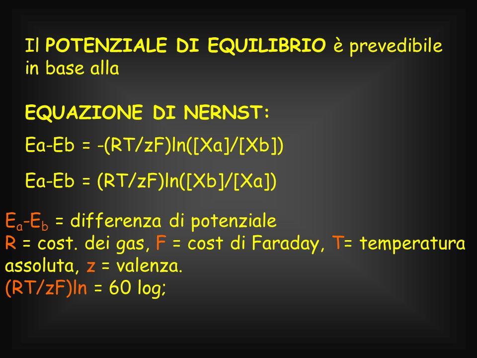 Il POTENZIALE DI EQUILIBRIO è prevedibile in base alla EQUAZIONE DI NERNST: Ea-Eb = -(RT/zF)ln([Xa]/[Xb]) E a -E b = differenza di potenziale R = cost
