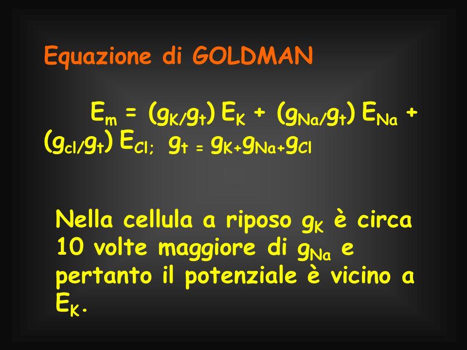 Equazione di GOLDMAN E m = (g K/ g t ) E K + (g Na/ g t ) E Na + (g cl/ g t ) E Cl; g t = g K+ g Na+ g Cl Nella cellula a riposo g K è circa 10 volte