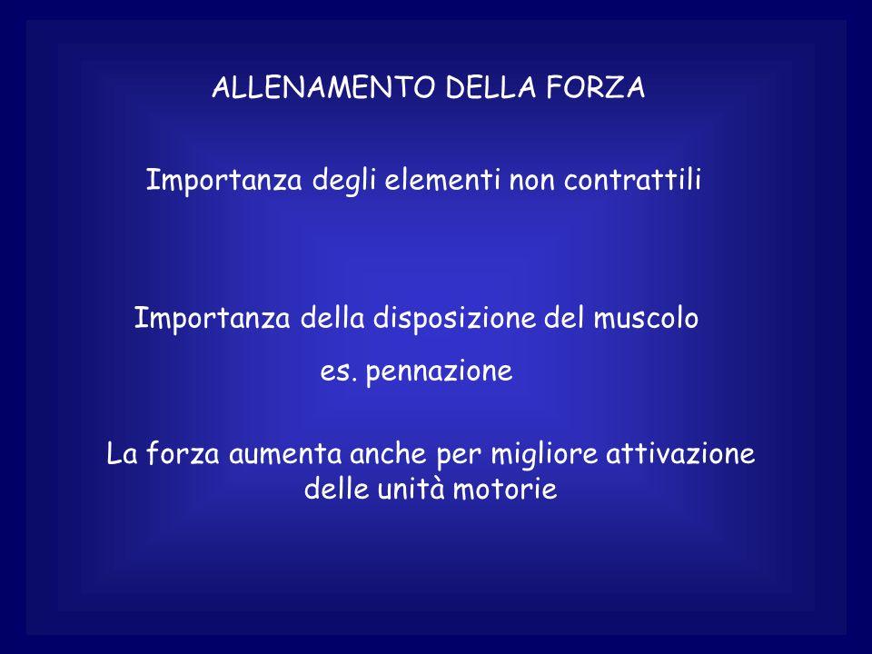 ALLENAMENTO DELLA FORZA Importanza degli elementi non contrattili Importanza della disposizione del muscolo es. pennazione La forza aumenta anche per