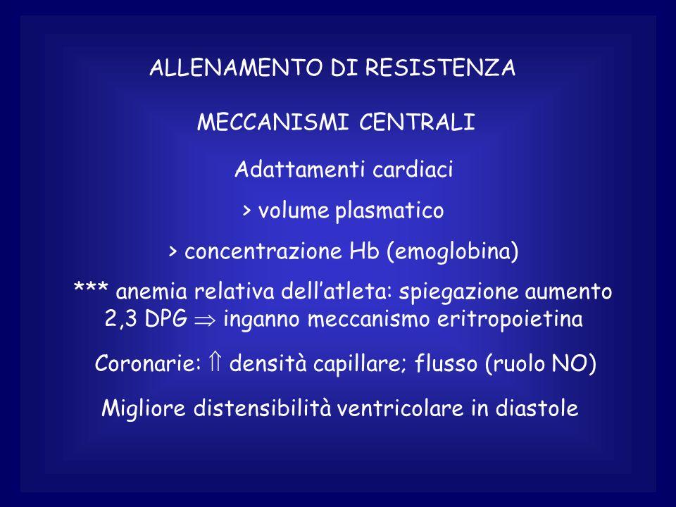ALLENAMENTO DI RESISTENZA MECCANISMI CENTRALI Adattamenti cardiaci > volume plasmatico > concentrazione Hb (emoglobina) *** anemia relativa dellatleta