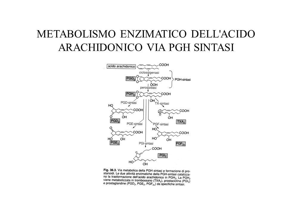 PGH SINTASI Unica proteina dotata di due attività enzimatiche: ciclo-ossigenasica che porta a PGG2 e perossidasica che riduce PGG2 a PGH2 Almeno tre isoforme di PGH sintasi PGH sintasi-1: controlla la sua stessa espressione genica e va incontro ad inattivazione suicida Bloccata da FANS in modo reversibile (ibuprofen, piroxecam, sulindac) o irreversibile (aspirina) Apirina acetila Ser-529 che provoca un ingombro sterico per l accesso del substrato al sito ciclo-ossigenasico