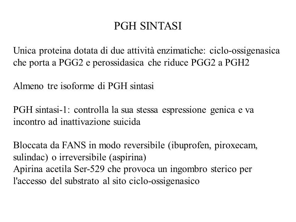 PGH SINTASI PGH sintasi-2: in cervello, testicoli, prostata e rene; è inducibile in monociti, fibroblasti e cellule endoteliali stimolati da IL-1, LPS, PDGF: sarebbe responsabile di edema, vasodilatazione e algesia in processi infiammatori Bloccata da FANS e, in alcuni tipi cellulari, da glucocorticoidi.