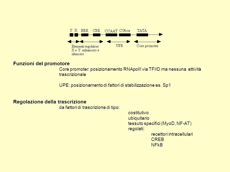Funzioni del promotore Core promoter: posizionamento RNApolII via TFIID ma nessuna attività trascrizionale UPE: posizionamento di fattori di stabilizz