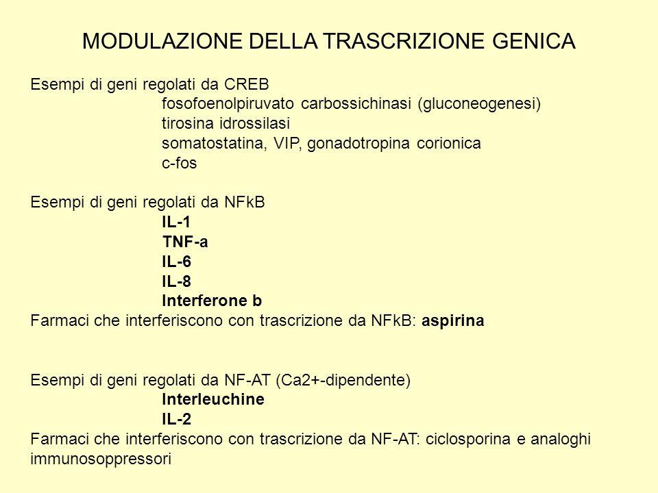 Esempi di geni regolati da CREB fosofoenolpiruvato carbossichinasi (gluconeogenesi) tirosina idrossilasi somatostatina, VIP, gonadotropina corionica c