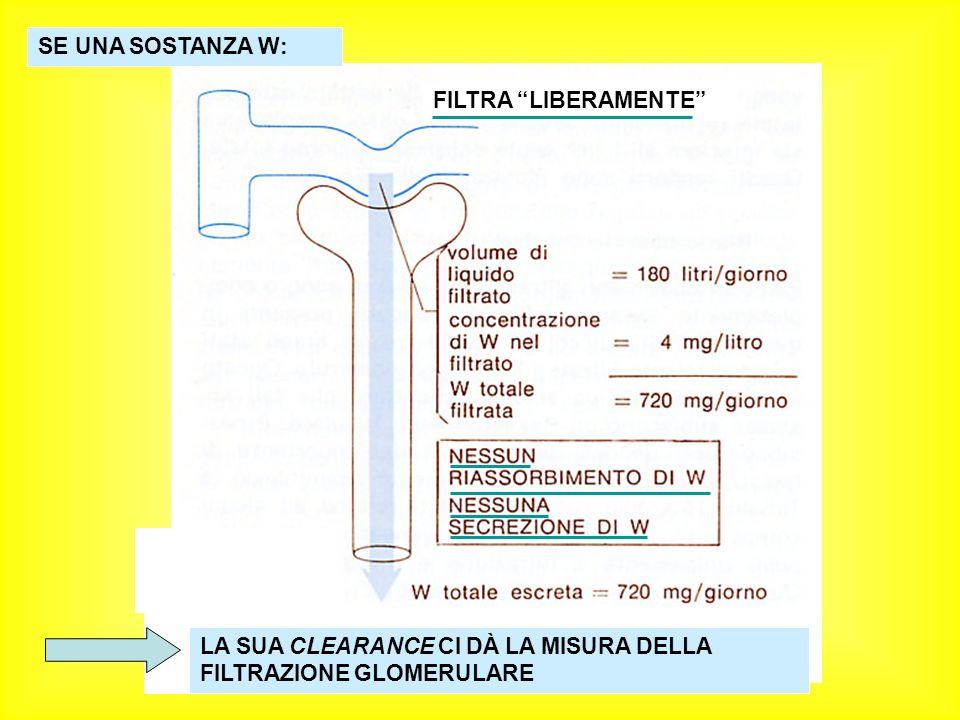 FILTRA LIBERAMENTE SE UNA SOSTANZA W: LA SUA CLEARANCE CI DÀ LA MISURA DELLA FILTRAZIONE GLOMERULARE