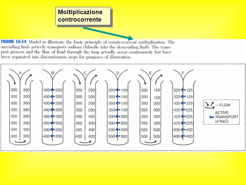 Moltiplicazione controcorrente