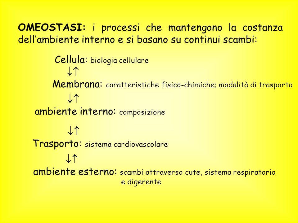 OMEOSTASI: i processi che mantengono la costanza dellambiente interno e si basano su continui scambi: Cellula: biologia cellulare Membrana: caratteris